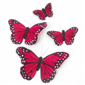 Butterfly Clearance Sale