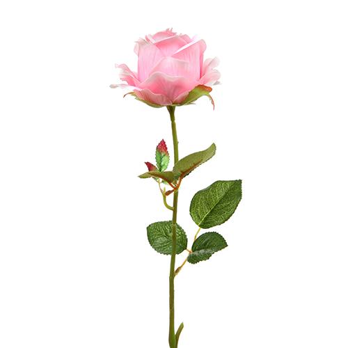 single pink flower rose - photo #31